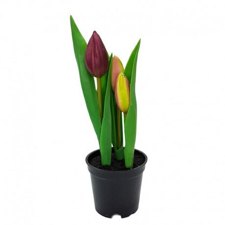 Wielkanocne dekoracyjne kwiaty tulipany